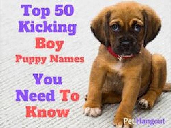 Top 50 Kicking Boy Puppy Names You Need To Know