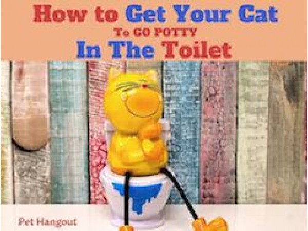 How to get Your Cat to Go Potty in The Toilet