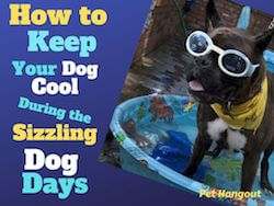 How to Keep your Dog Cool during the Sizzling Dog Days