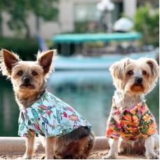hawaiian dog shirts