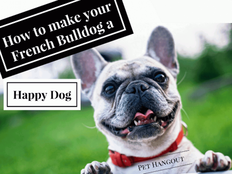 Blog post 10 lead slide of a cute frenchie bulldog