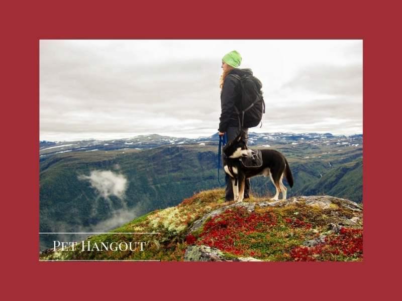 HikingWithDog
