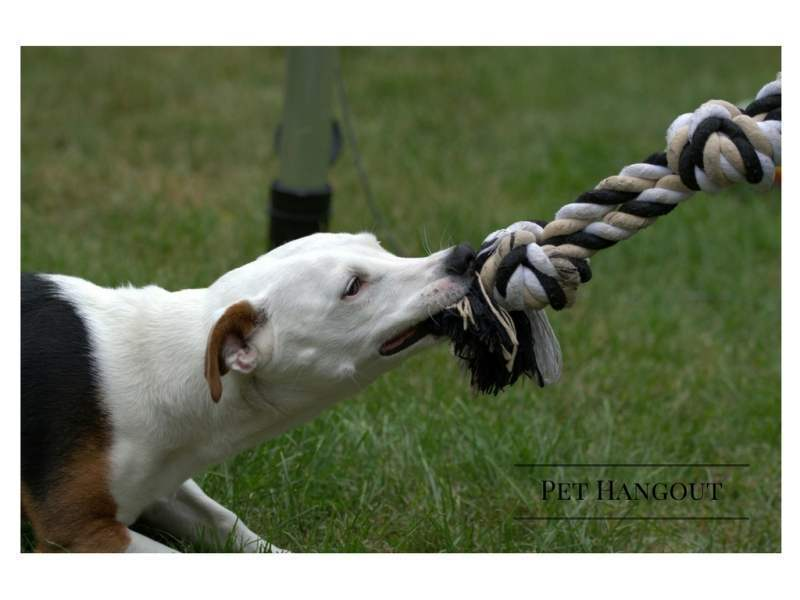 DogPlayingTugOfWar