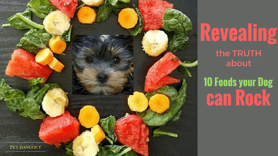 Headline pic for Blog on 10 Foods your dog can rock