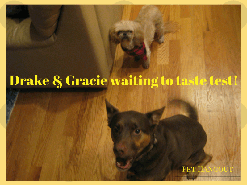 Drake and Gracie waiting to test