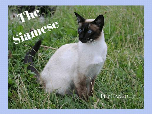 11 Little Secrets of the Playful and Beautiful Savannah Cat