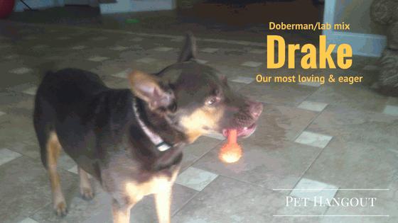 Dog - Drake