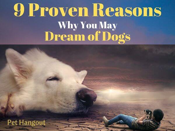 9 Proven reasons why you may dream of dogs