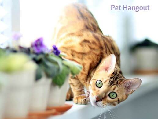 Bengal kitty with flower.