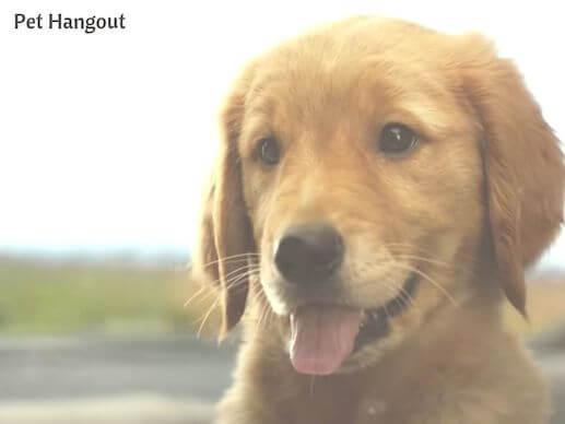 Puppy Enzo.