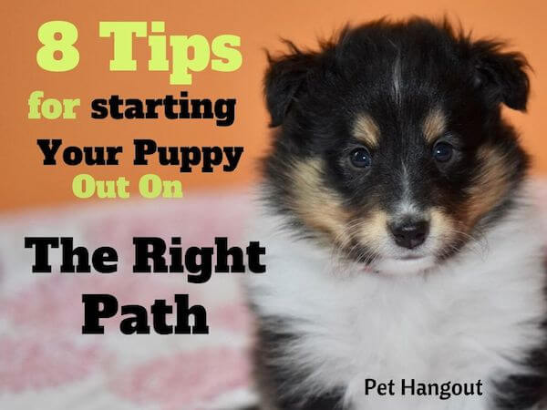 8 Tips for Starting Your Puppy Out On The Right Path