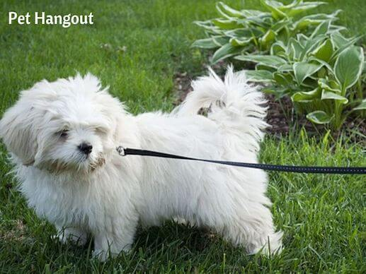 Teach your dog to walk on a leash and go potty outside.