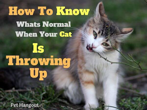 How to know whats normal when your cat is throwing up.