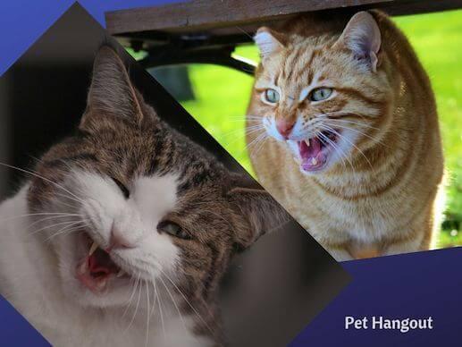 Kitty may feel threatened and hiss.