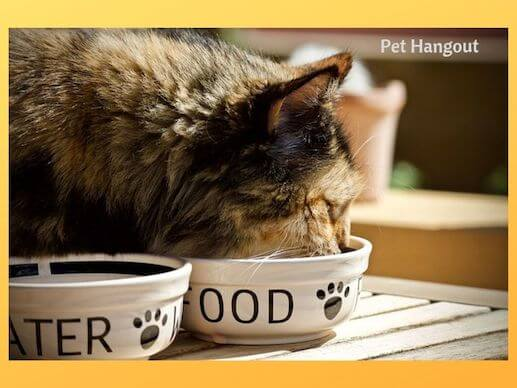 Kitty may gulp their food and get sick.
