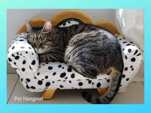Kitty sleeping in a cat sofa.