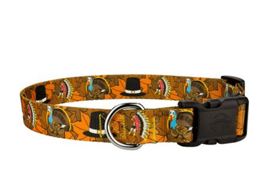 thanksgiving pilgrim dog collar