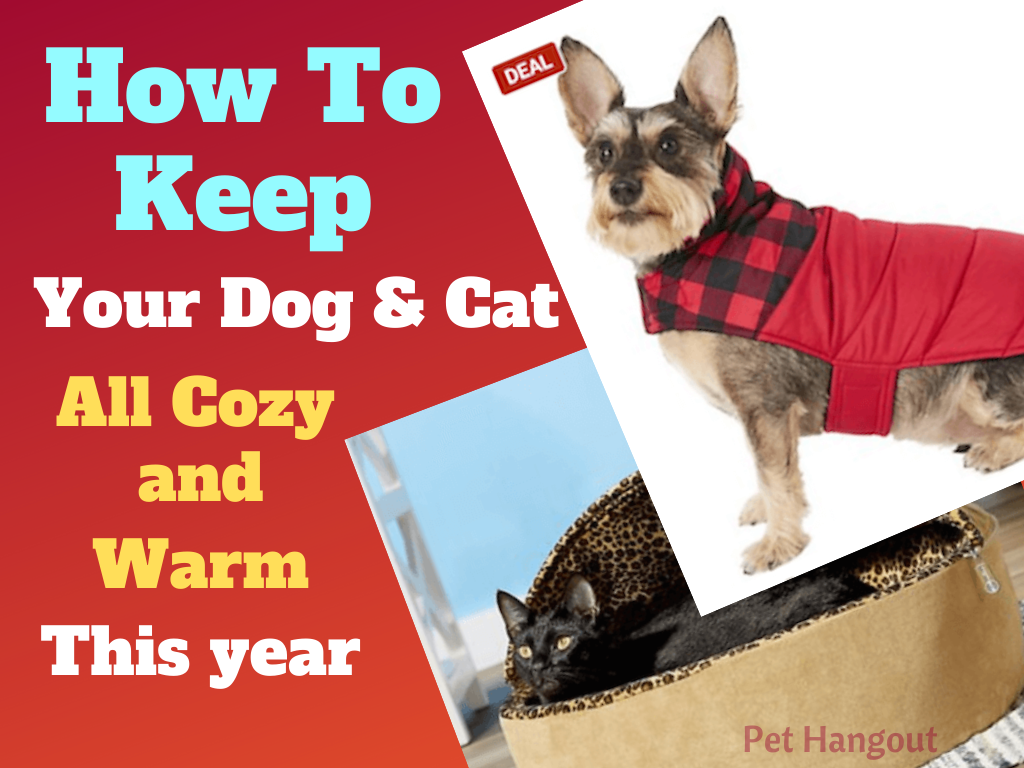 How to keep your dog and cat all cozy warm this year.