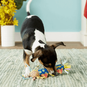 Freezable dog toy for teething puppies