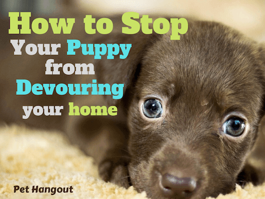 How to stop your puppy from devouring your home.