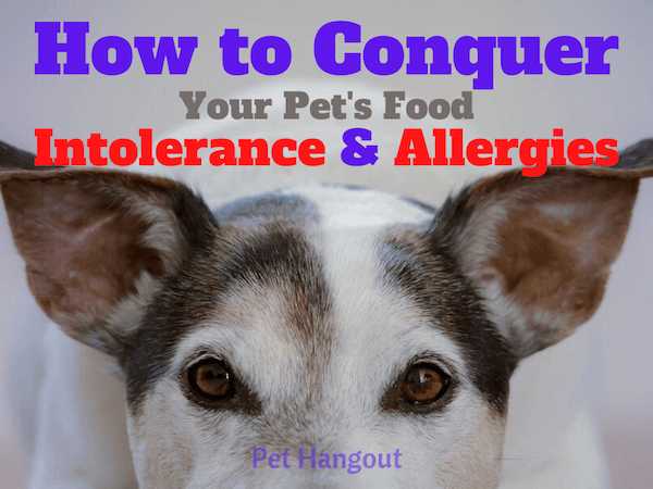 How to conquer your pet's food intolerance and allergies