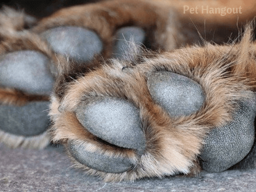irritated paws could mean food allergies.
