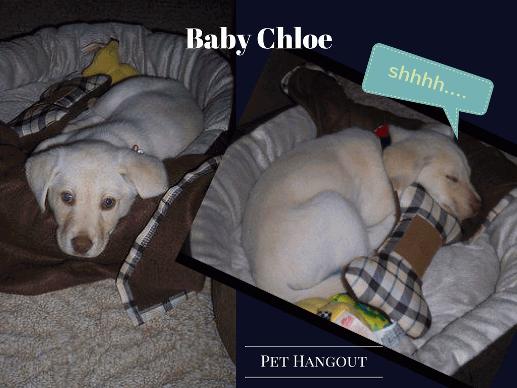 Baby Chloe sleeping in her bed