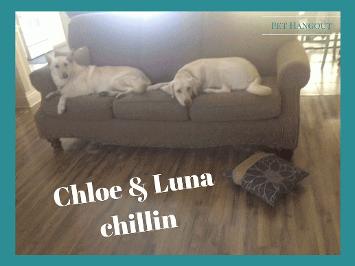 Chloe and Luna chilling on the couch