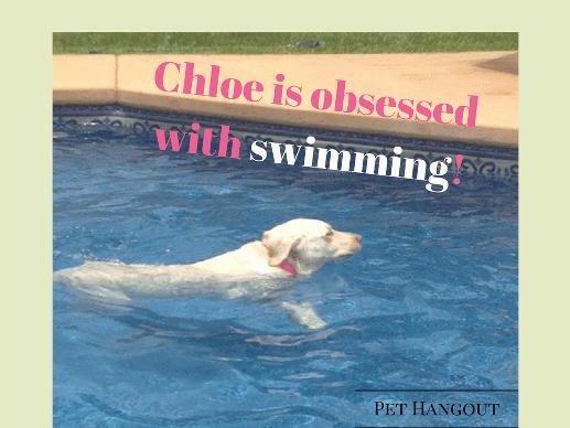 Chloe loves to swim.