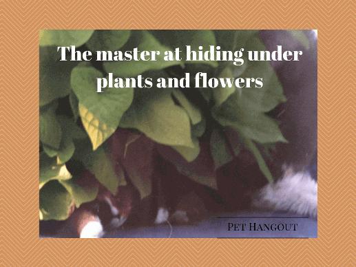 Chelsey lying understand a potatoe plant