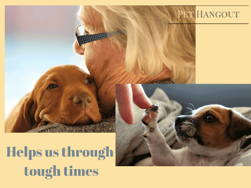 Owning a dog can help you through tough times