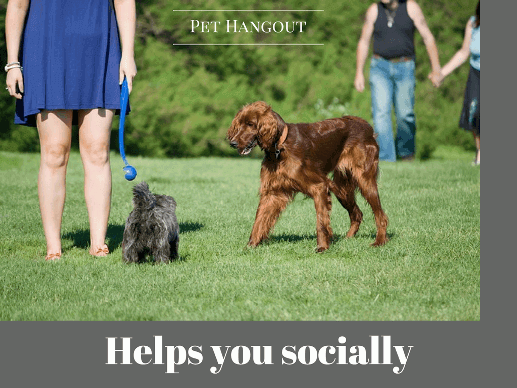 Your dog can help you in social situations
