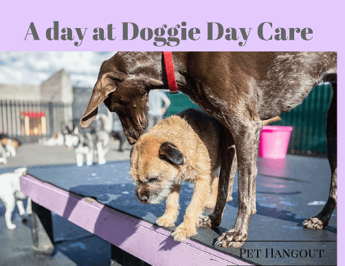 Two dogs playing at doggie day care