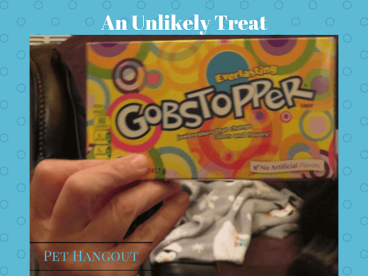 Gobstoppers an unlikely dog treat