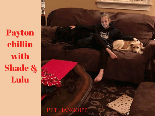Payton sitting on the couch with the pups