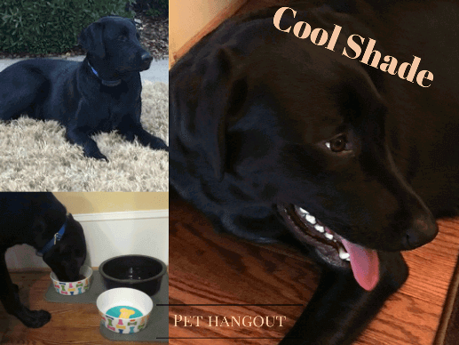 Multiple pics of Shade the cool dog