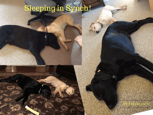 Shade and Lulu copying each other for perfect sleep formation