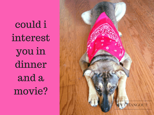 Shy dog inviting you to dinner and a movie