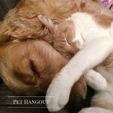 Dog and cat cuddling while sleeping