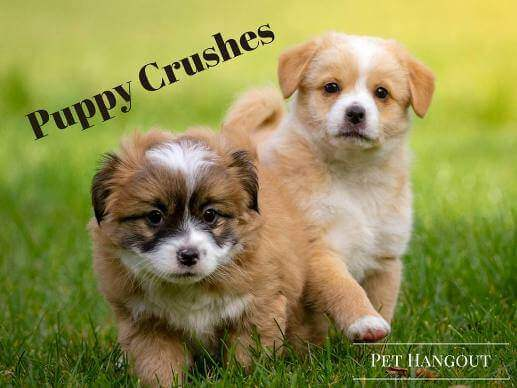 Adorable puppies running and we are crushing