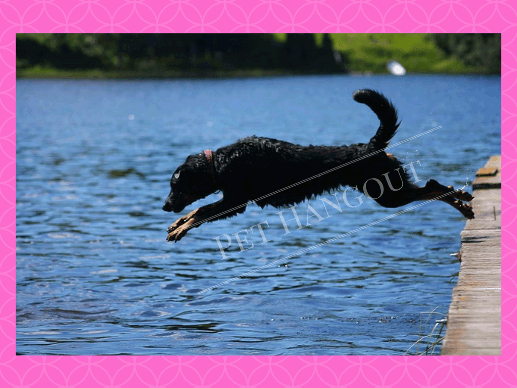 Dog diving into the lake