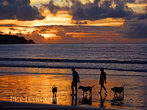 A dog family with their humans on the beach