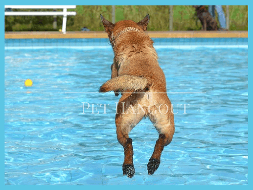Dog leaping into the pool to get his ball