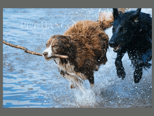 Dog pals running out of the water with a stick