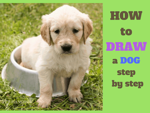 Lead picture for blog post 20 - How to draw a dog step by step