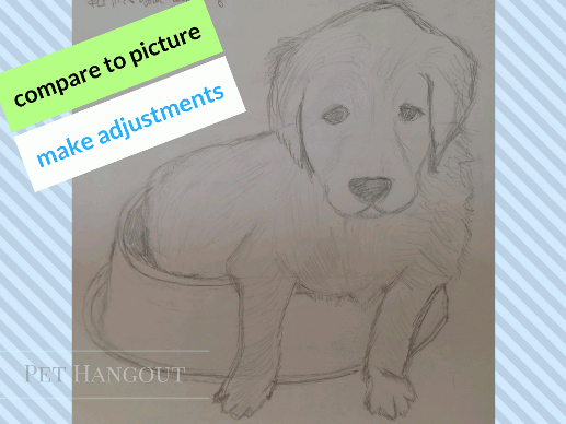 compare your sketch to the picture and make adjustments