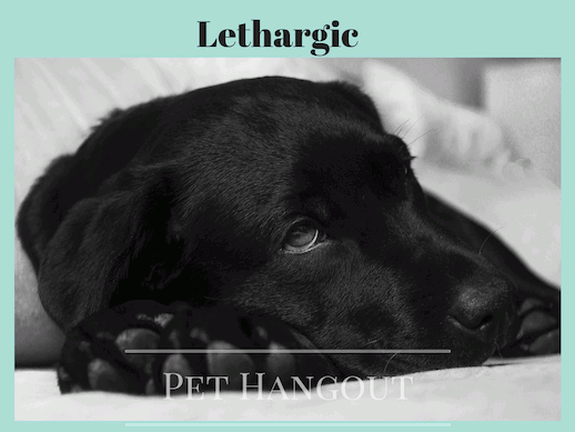 A sick dog could be lethargic