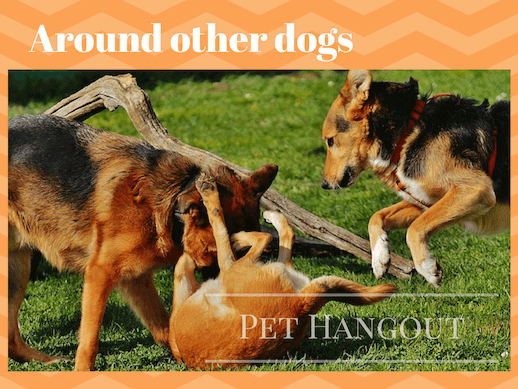 A dog can catch kennel cough from being around other dogs