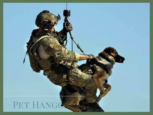 Military dog being lowered