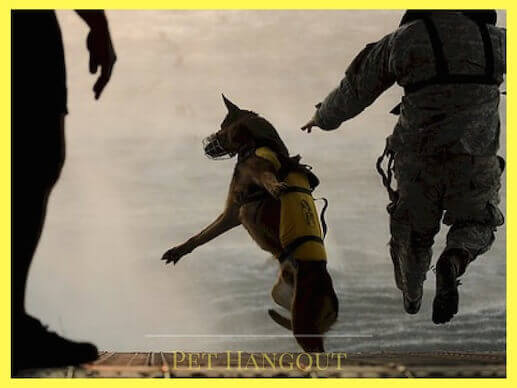 Military dog sky diving